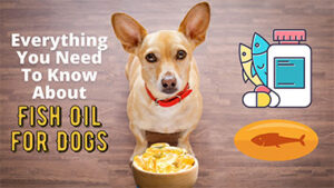 Read more about the article Everything You Need To Know About Fish Oil for Dogs