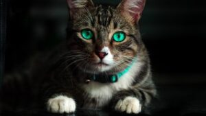 Read more about the article Unexpected Truth to Know About Why Do Cats Knead?