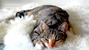 Read more about the article The Complete Truth About Down Syndrome Cat