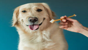 Read more about the article How To Clean Dog Teeth Without Brushing?
