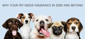 Read more about the article Why Your Pet Needs Insurance in 2020 and Beyond