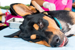 Read more about the article Reasons for Spaying and Neutering Dogs (Pros and Cons)