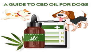 Read more about the article The Ultimate Guide to CBD Oil for Dogs