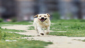 Read more about the article 11 Best Lively Dog Breeds for Runners and Active People