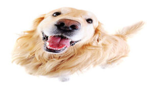 Read more about the article Why Do Dogs Lick? 8 Reasons You Have To Know