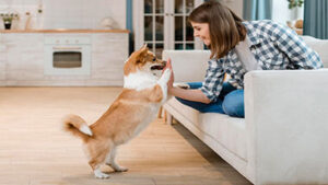 Read more about the article Best Small And Medium Size Dogs For Apartments