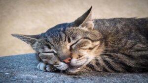 Read more about the article Why Is My Cat Drooling? Symptoms, Causes and Diagnosis