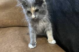 KITTENS AND CATS, Mixed Breed