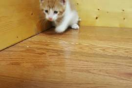 Kittens for rehoming, Mixed Breed