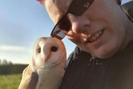 Hand Raised Owl For Rehoming, Owl Finch