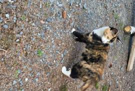 Mama mouser, Mixed Breed