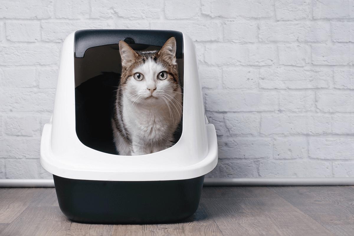 cat in closed litter box
