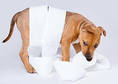 when to start potty training dog