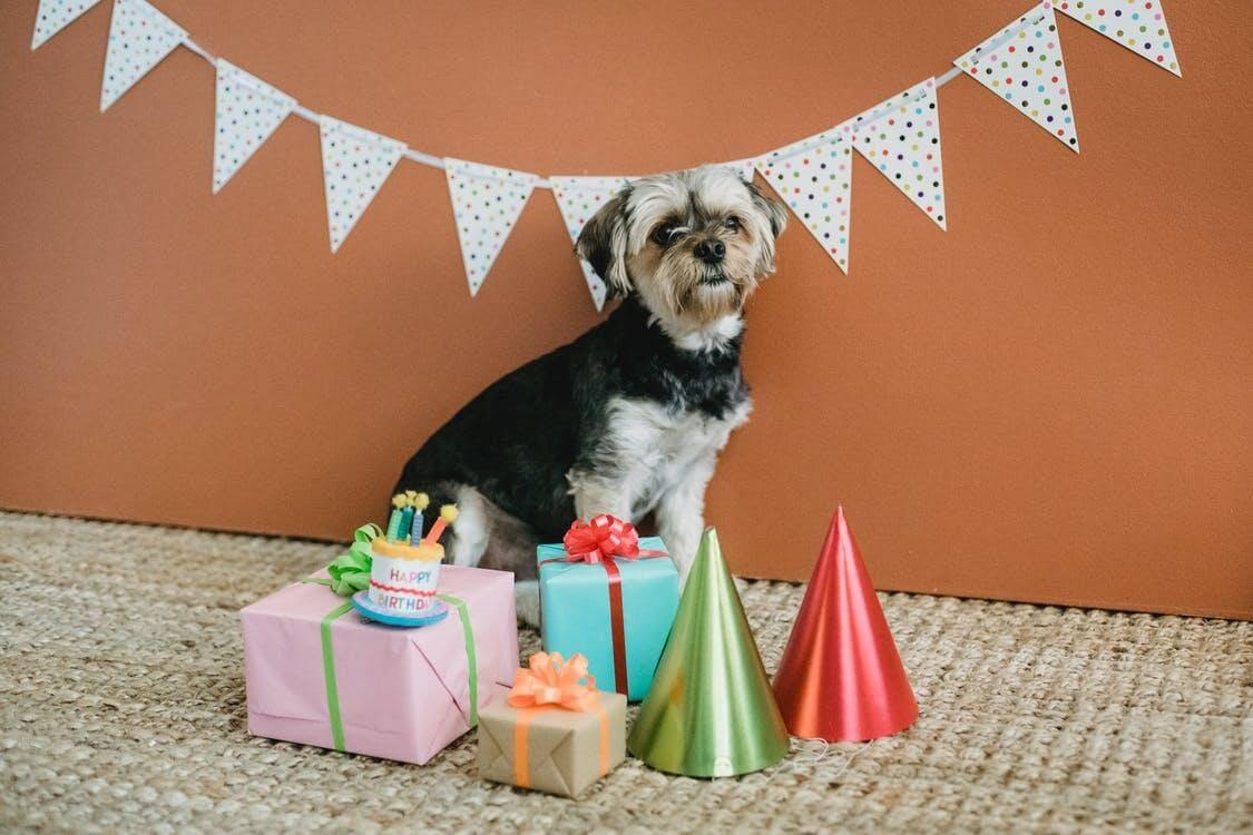 Free stock photo of birthday, card, celebration