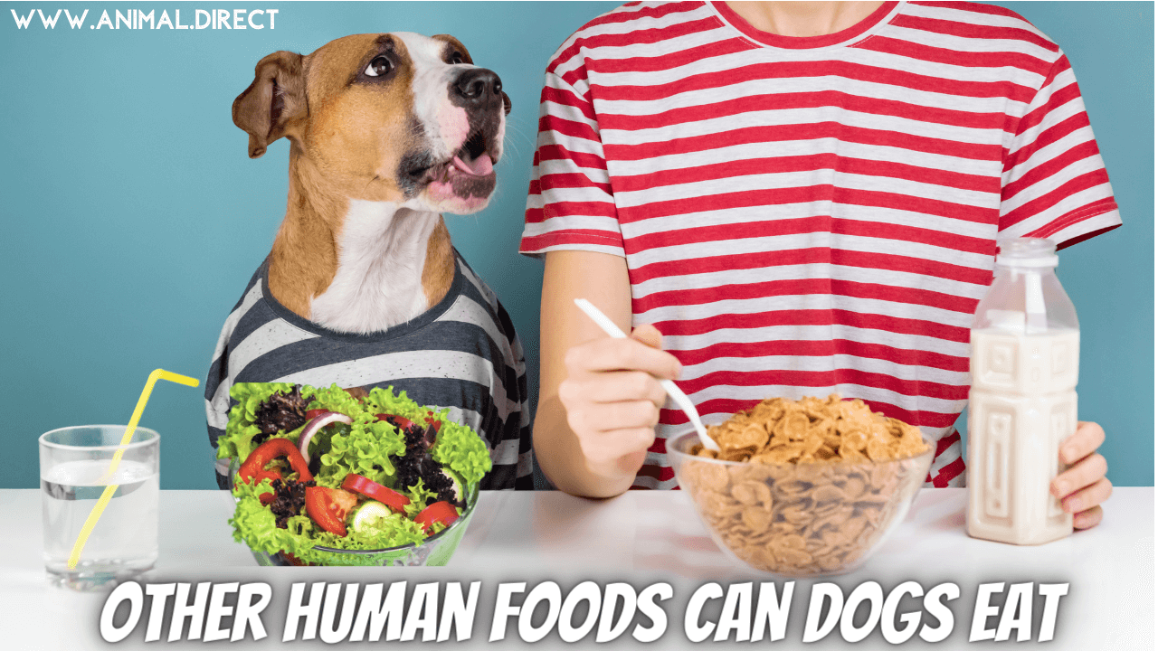 Other Human Foods Can Dogs Eat