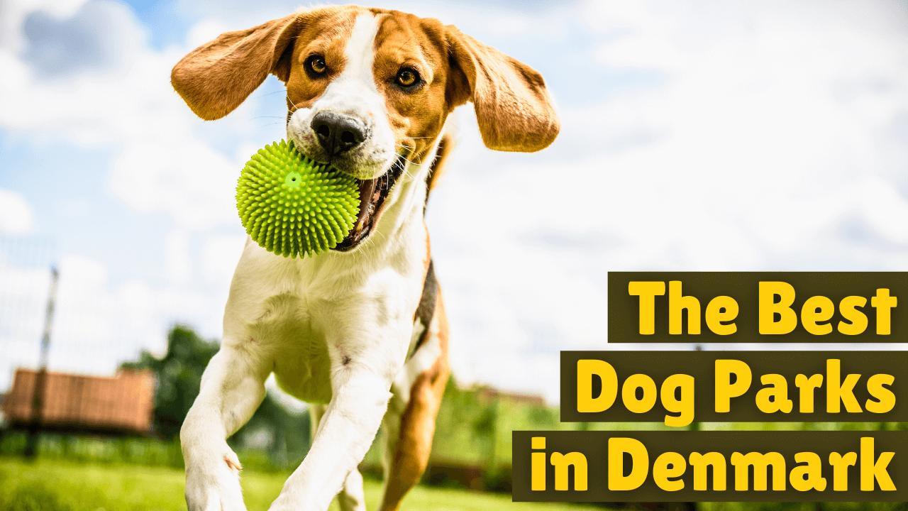 the best dog park in Denmark