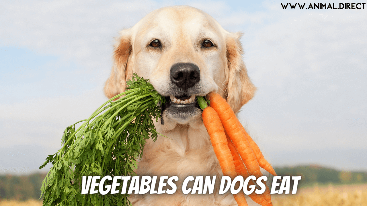 Vegetables Can Dogs Eat