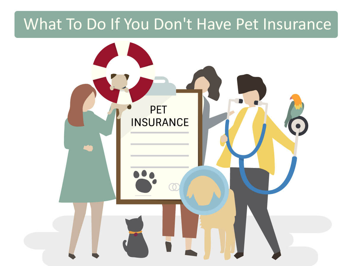 What To Do If You Don't Have Pet Insurance