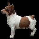Teddy Roosevelt Terrier