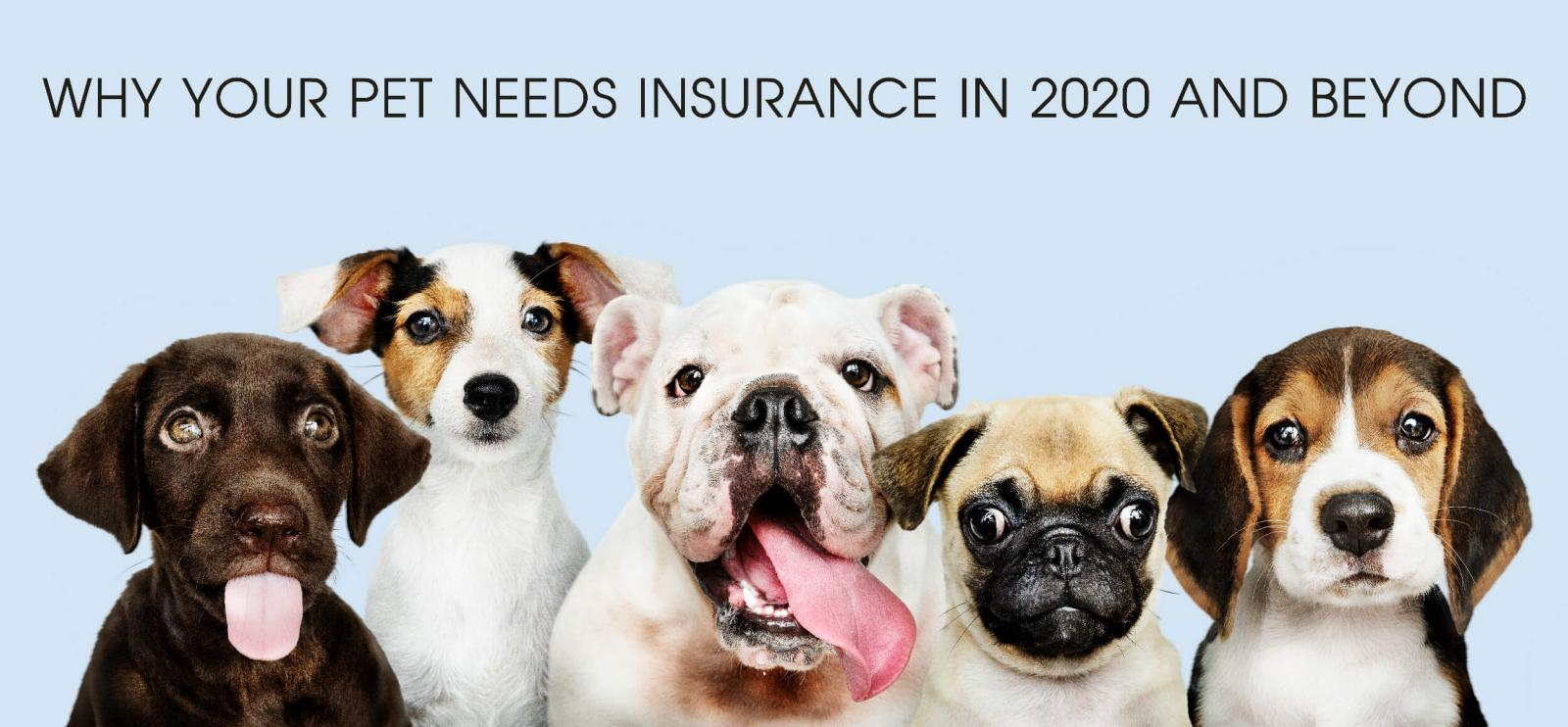 Why Your Pet Needs Insurance in 2020 and Beyond