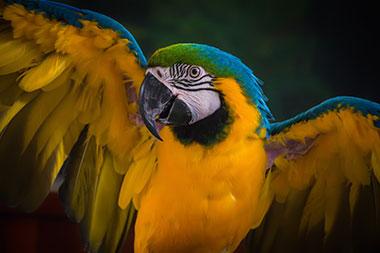 pet parrot lifespan